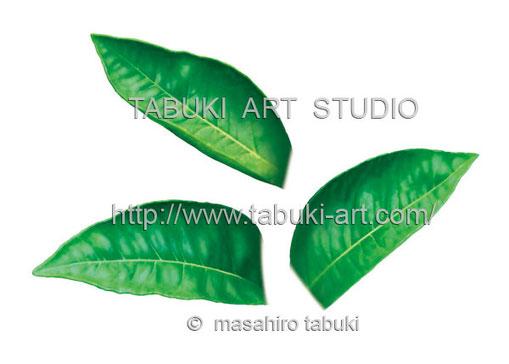 伊予柑 イラスト 素材イラスト パッケージ レンタル ジューシー シズルイラスト 柑橘の葉