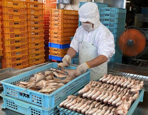 熟練した社員が、鯛を1尾ずつ丁寧に串に刺します。