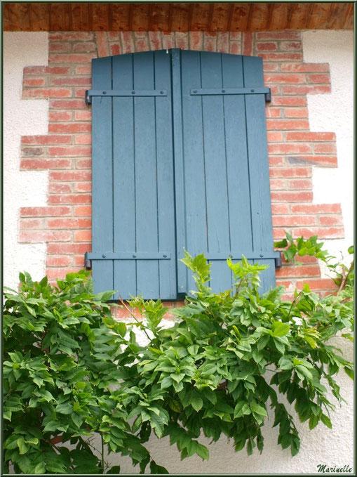 Fenêtre aux volets bleus, briquettes et treille dans le village d'Aas, Vallée d'Ossau (64)
