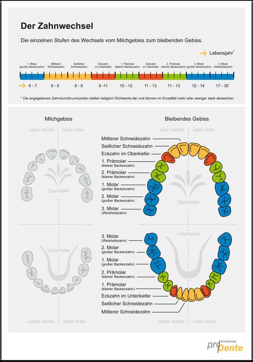 Verläuft der Zahnwechsel bei meinem Kind richtig? Hier können Sie es überprüfen! (© proDente e.V.)