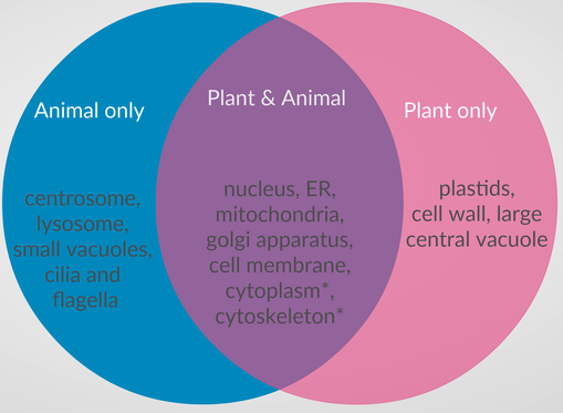 Differences and similarities between plant and animal cells withcarbon the following organelles are common to plants and animal cells nucleus er mitochondria and golgi apparatus plasma membrane aka cell membrane ccuart Images