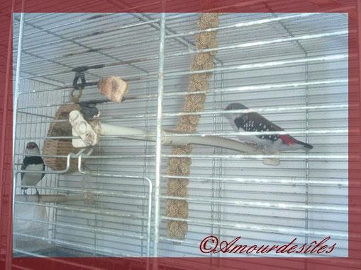 La petite rescapée est sur la gauche et le nouveau mâle à droite...