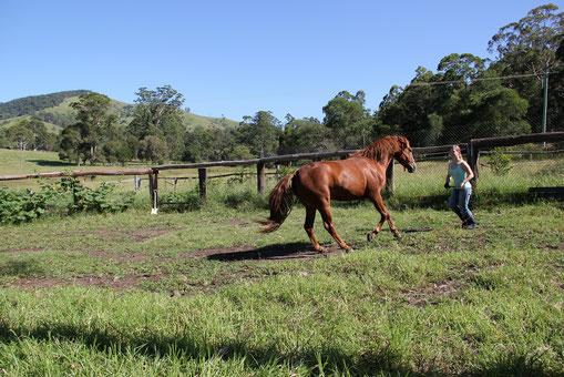 Pferdetraining durch Führung mit innerer mentaler Stärke