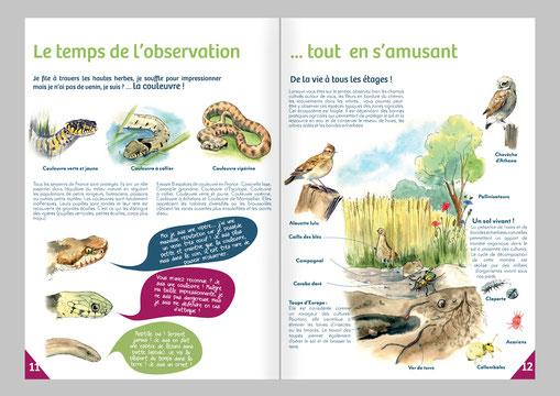 illustration, biodiversité, atlas, livret pédagogique, nature, interprétation