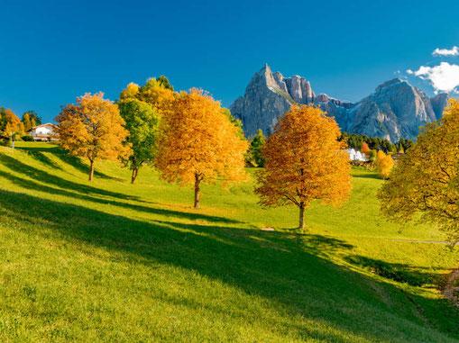 Bild: DiegoMariottini/Shutterstock.com