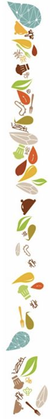 bordure-2-fruits-de-terre