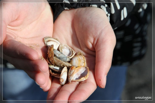 Erste Muscheln werden gesucht und gefunden.