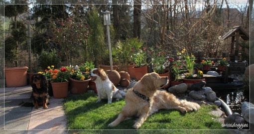 ... kann heute nicht so richtig mithalten - gähn - doch Roxy riecht es ganz genau: Frühling liegt in der Luft!