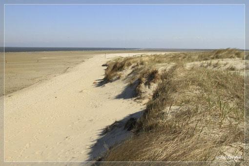 Nach dem Essen und dem Verdauungsspaziergang ging es weiter nach De Cocksdrop, den nördlichsten Teil der Insel.