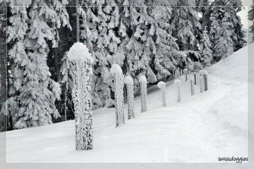 Winterwunderland....