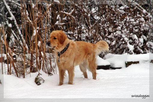 Goldie Roxy checkt die Lage im Garten