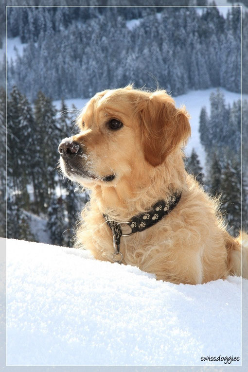 So - im Schnee geblockt, da bleibt auch unser Wildfang Roxy mal hocken.
