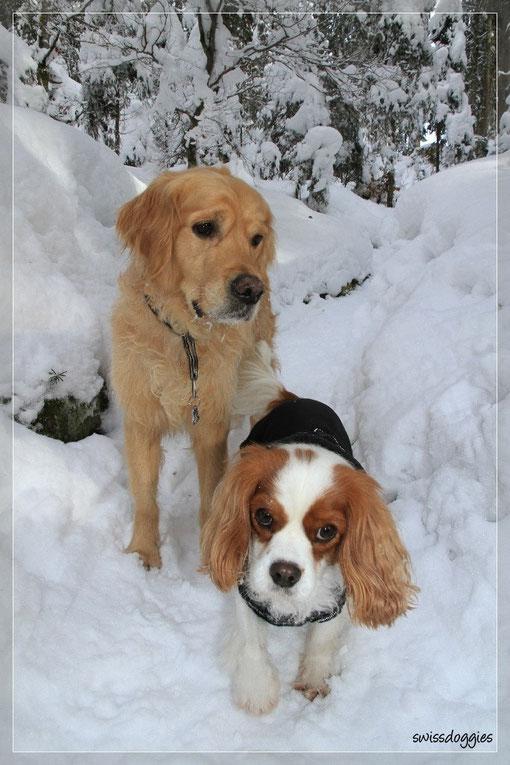 ... durch den tief verschneiten Tannenwald.