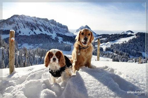 Swissdoggies vor Swiss Mountains