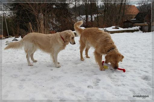 Klaro doch, hat überlebt. Roxy liebt sein Poulet heiss und innig und Mama hat da auch immer noch ein Auge, das über ihm wacht :-)