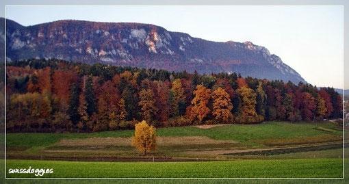 wo wir einen wunderbaren Spaziergang durch den Herbstwald...