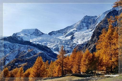 Und einmal mehr überwältigt von der Schönheit der Natur hier: goldene Lärchen, Gletscher, blauer Himmel - kaum Leute... was will man mehr?