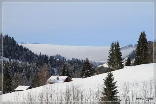 Sieht cool aus - das Nebelmeer oder die Nebelwand? - findet ihr nicht auch ?