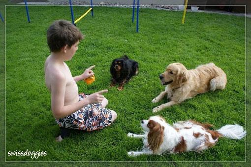 """Oliver mit den doggies, die alle je ein Goodie auf den Pfoten haben und artig auf sein Kommando """"nimms"""" warten."""