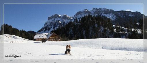 Da es kein grosses Skigebiet ist, hat's auch nie sehr viele Leute hier. Blick auf den Hogant.