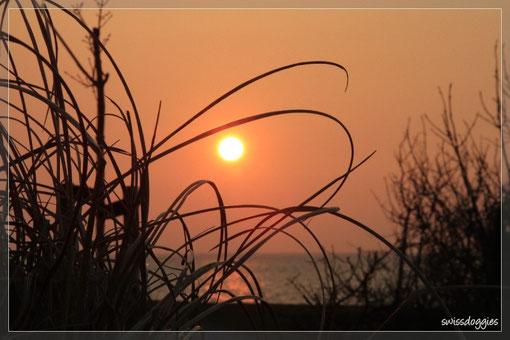... und Mama bekommt wieder ihren wunderschönen Sonnenuntergang (Nachtessen wird auf später verschoben ;-).