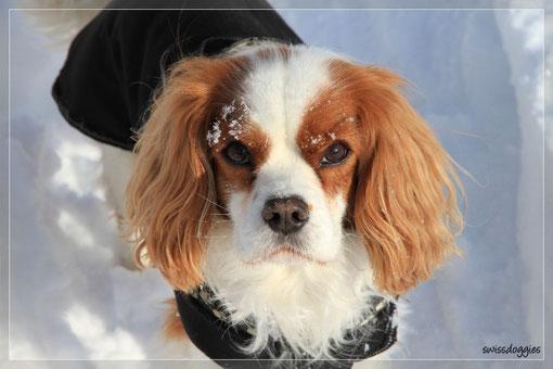 ... meine Schwoscht und Papa haben wir beim Skilift abgeliefert und nun geht's ab in den Schnee.