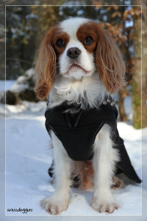 Aber auch ohne Thron sieht er aus wie ein kleiner Schneekönig :-) - sei es im Wald...
