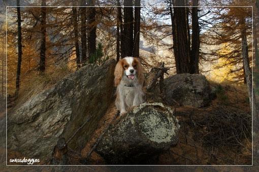 Charly gefällt's im Märchenwald!