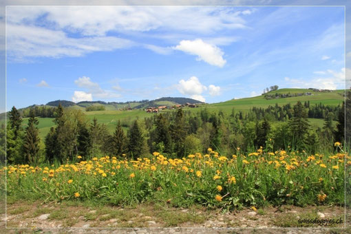 Wunderschön hier auf dem Hartlisberg!