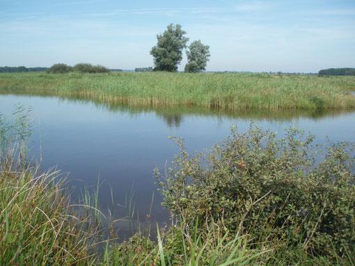 Auen, Feuchtwiesen, Weiden mit Blänken und Weihern prägen das Gesicht der Hörnerauniederung