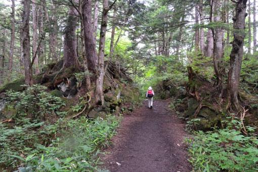 林道のようなところもあれば、このように自然に包まれたところも