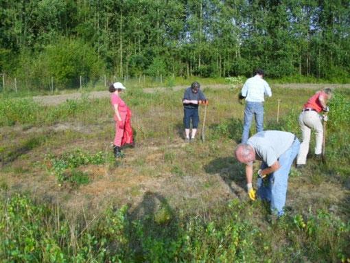 Mitglieder der AG Botanik bei der Arbeit,   Bild: Thomas Hövelmann
