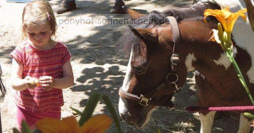 Ponypflege und Ponyreiten für Kinder aus Köln, Bergisch Gladbach und Umgebung