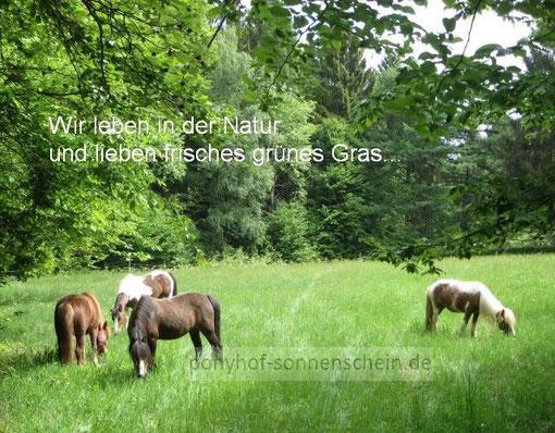 In der Natur bei Köln Ponyreiten im Grünen!