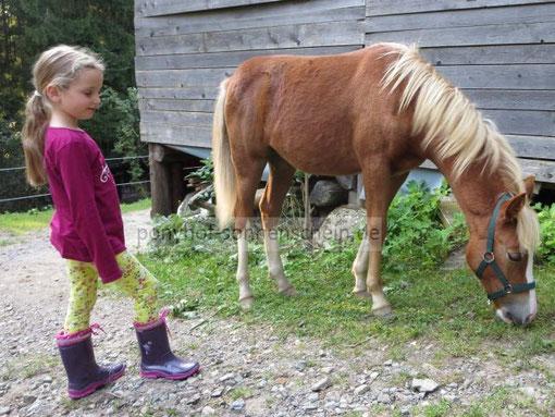 Ponystreicheln am Ponyhof