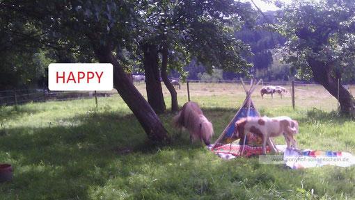 Ponykontakt, Ponypflege und Ponyreiten für Kinder in der Natur
