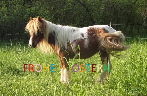 Viel Spass mit den Ponys in den Osterferien beim Ponyreiten