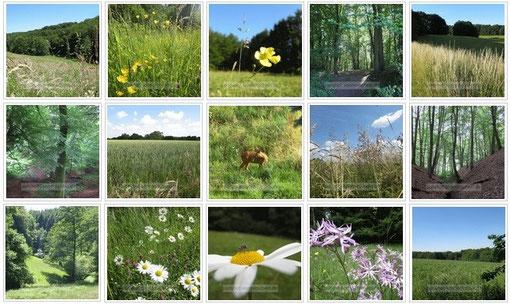 In Natura - Komm und entdecke die Natur ganz nah bei Köln Bergisch Gladbach Leverkusen