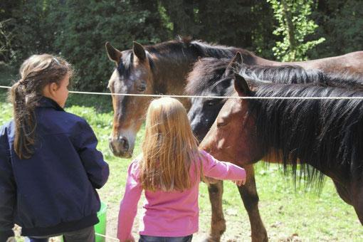 Wir sind der Ponyhof für Köln in der Natur