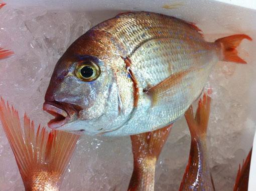 粋のいい魚、はいってます!(日曜限定)