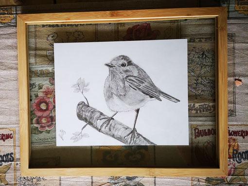 8. Robin...Pencel drawing 5 Potlood tekening ingelijst tussen twee glasplaten.