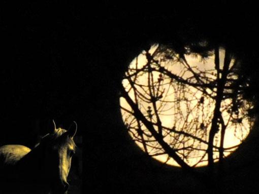 Ulan im Mondschein Foto Marianne Forrer