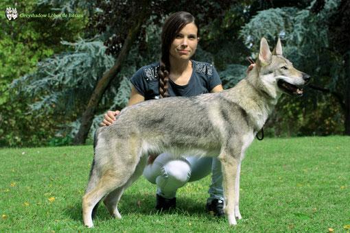 GreyShadow Lobos de Bilsaru  (Bluszcz Wilk z baśni x Evon Wolf Rhoderick sodar)