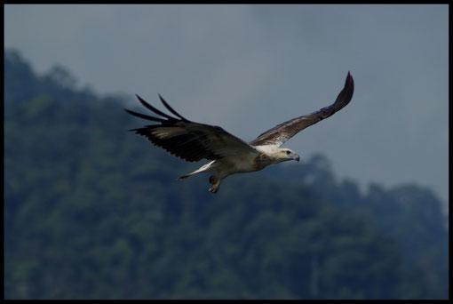 Seeadler Malaysia