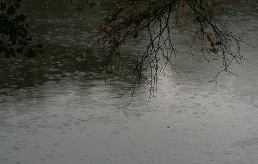 Regen Regentropfen ziehen Kreise im Wasser Herbstblätter Regenwetter Fantasie & Wirklichkeit Kathrin Steiger Fotografien und Gedichte