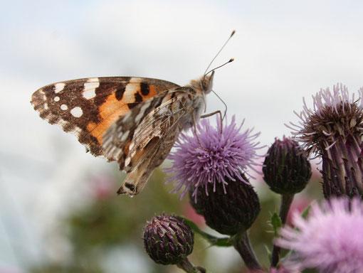 Fantasie und Wirklichkeit Fotografien und Gedichte Kathrin Steiger Schmetterling