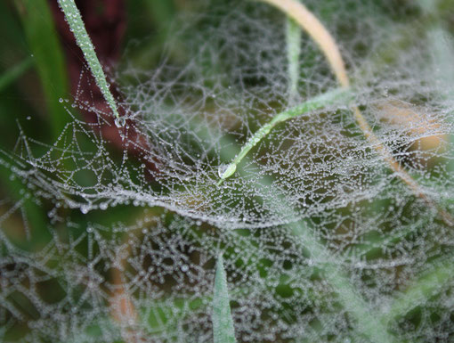 Wassertropfen auf Spinnennetz