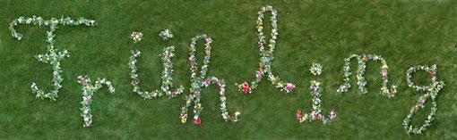 Fantasie & Wirklichkeit Fotografien und Gedichte Kathrin Steiger Überschrift Frühling Schriftzug Buchstaben aus Blumen