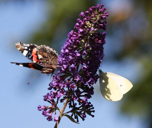 Fantasie und Wirklichkeit  Fotografien und Gedichte  Kathrin Steiger  Schmetterlinge