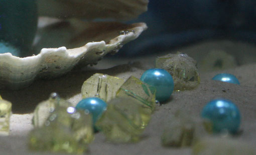 Fantasie & Wirklichkeit Fotografien und Gedichte Kathrin Steiger märchenhaft verträumt Muschel Perlen Luftblasen
